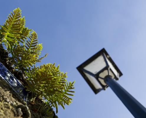 Une exposition sur les plantes sauvages des rues